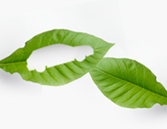 ventajas_medioambientales_autogas_tcm11-634001